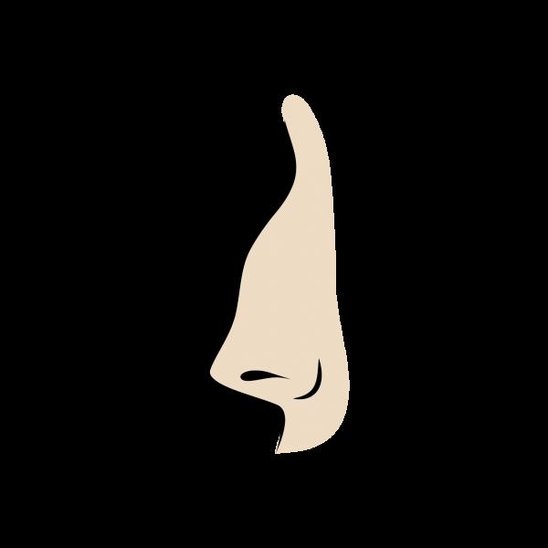 Burun_Cesitleri_egri_burun
